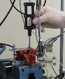 Drill bit apparatus